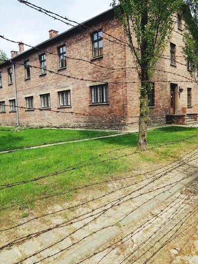 Architecture Concentration Camp Auschwitz Birkenau Auschwitz  Barbed Wire Prisoner Holocaust Jewish War Crimes NAZI Solemn Sobering Cruel Harsh Building Exterior Grass Sky Built Structure