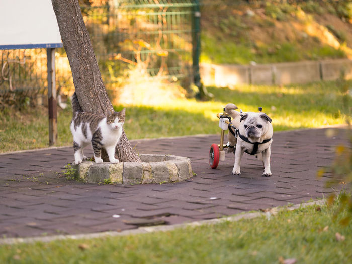 Dog and cat on footpath at public park