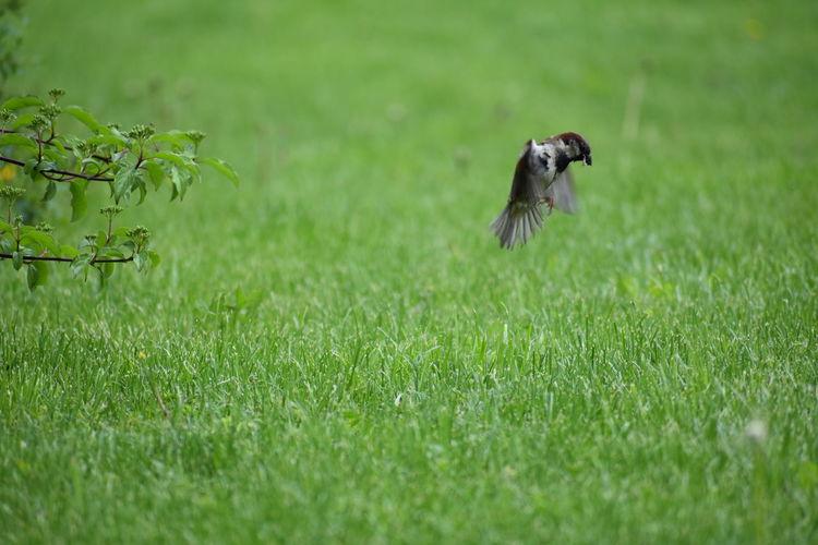 Bird on a meadow