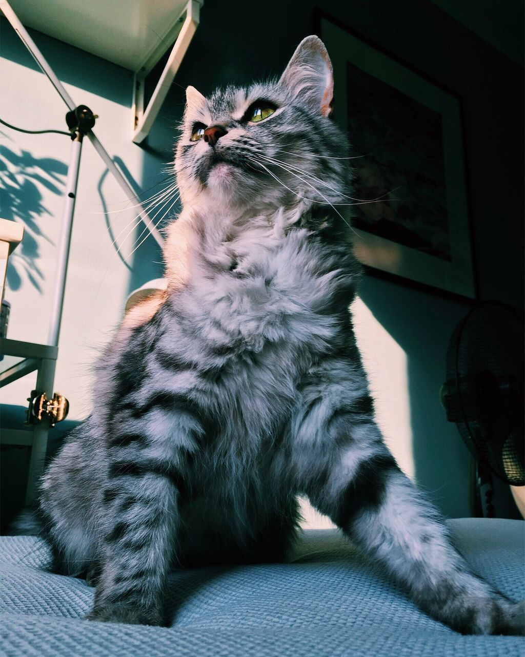 domestic cat, domestic animals, pets, one animal, animal themes, mammal, feline, indoors, no people, sitting, day, close-up