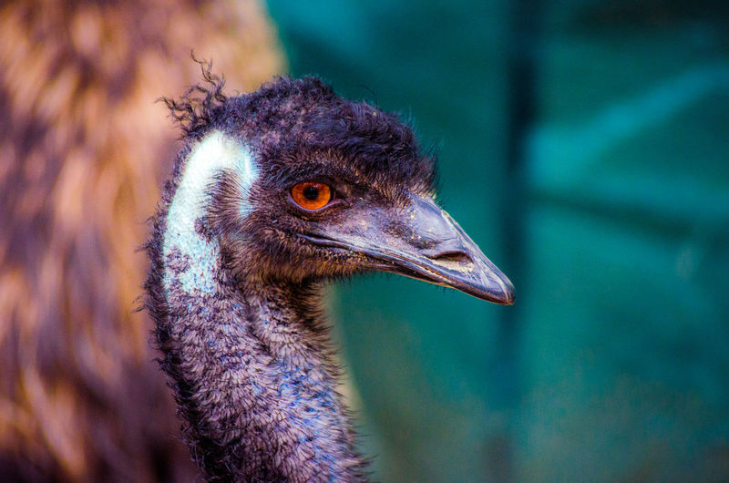 The guard Animal Animal Head  Animal Themes Animal Wildlife Animals In The Wild Australia Beak Beauty In Nature Bird Cairns Close-up Closeup Day Emu Focus On Foreground Nature No People One Animal Ostrich Outdoors Queensland Queensland Australia Tropical Tropical Animal Zoo Pet Portraits Analogue Sound
