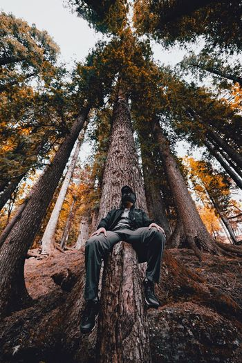 People And Places Tree Casual Clothing Outdoors Non-urban Scene Nature Carefree Exploration Tranquility WoodLand Beauty In Nature Scenics EyeEm EyeEm Best Shots EyeEmBestPics Eyeem Market Adventure Tree Trunk Forest Into The Wild Low Angle View Into The Woods Himalayas Person Woods