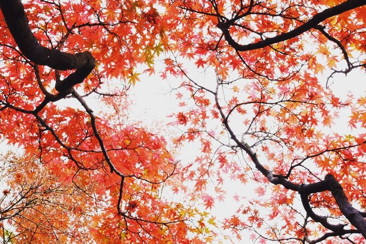 Tree Nature Beauty In Nature Autumn Leaf EyeEm Best Shots EyeTime 晩秋 紅葉 EyeEmBestPics