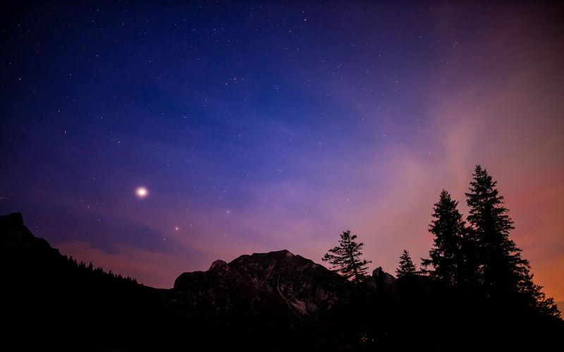 Tree Sky Star -