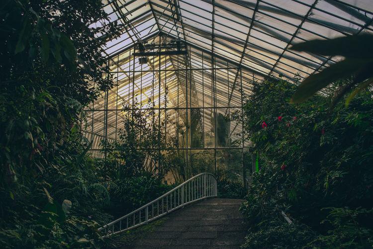 Bridge in greenhouse