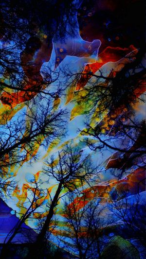 Woods Psicodelic Abstract Multi Colored No People Outdoors Nature Beauty In Nature Tree