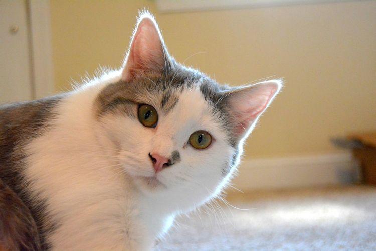 Cat Lensflare Hello Cute Pets Reallife Happy Mehappy EyeEmNewHere