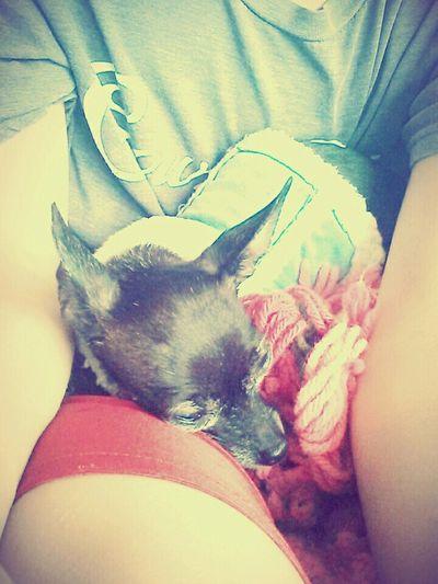 My Babay  Cute Dog