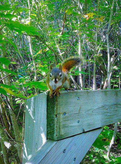 Squirrel 🐿