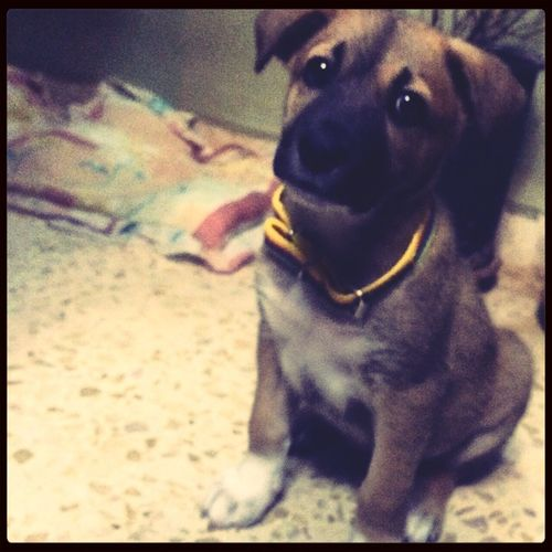 Meloooo ] #My_Dog <3 Maleno German