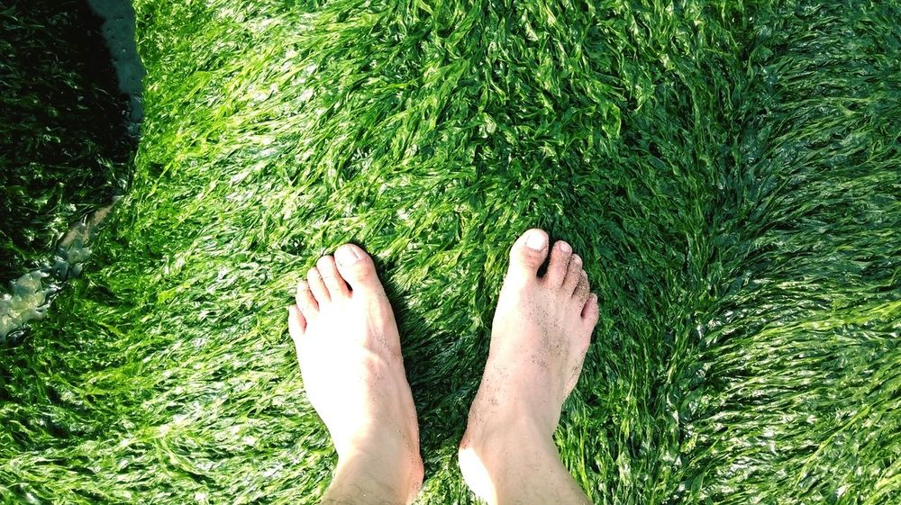 Balancing Act Foot Green Green Green!  Fresh From The Ocean Exploring New Ground Mint By Motorola Beautiful Nature EyeEm Nature Lover The Great Outdoors - 2015 EyeEm AwardsGrass The Great Outdoors With Adobe Live For The Story The Great Outdoors - 2017 EyeEm Awards