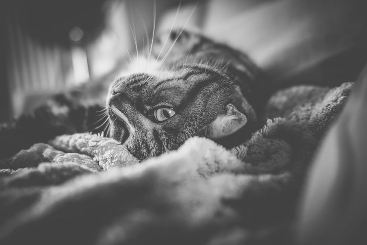 Black And White Black And White Photography Cats Cats Of EyeEm Day Domestic Animals Domestic Cat Indoors  Lying Cat No People Pet Pet Portraits