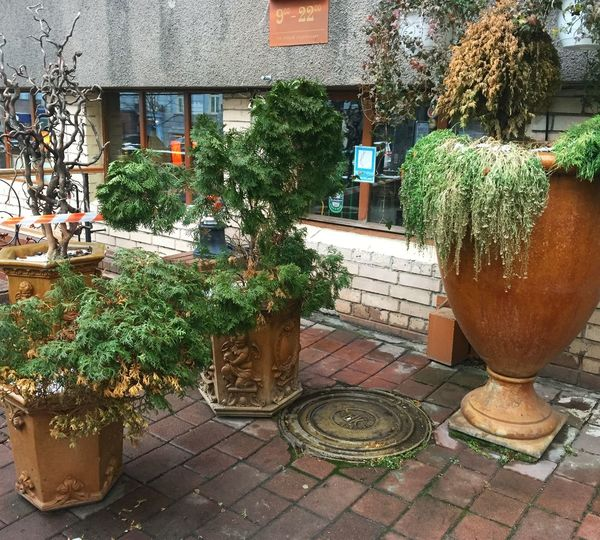 Plants on the streets of Kiev, Ukraine Architecture Beautiful Beautiful Nature Beauty In Nature Built Structure Bush Cold Green Hatchway Kiev Nature Nature Photography Nature_collection No People Plant Potted Plant Street Travel Travel Destinations Tree Ukraine Vase Winter