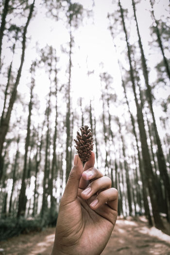 Human hand holding pine tree trunk in forest