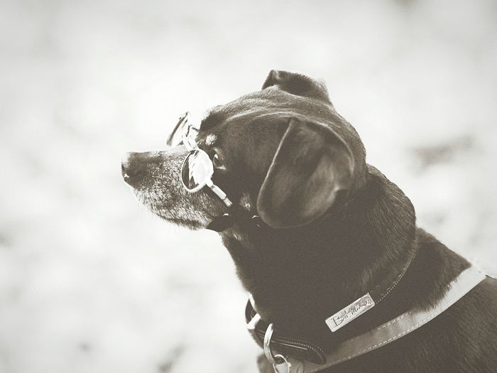 Pets Dog Dog Love Dogs DogLove Dogslife Pet Photography  Monochrome _ Collection Black And White Photography Black And White Collection  Blackandwhitephotography Dog Lover Dog❤ Best Friend Blackandwhite Black & White Black&white BYOPaper!