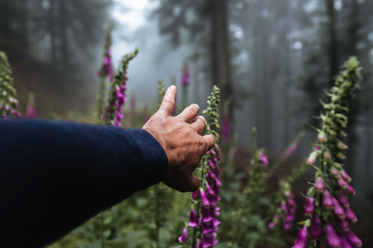 Cropped hand touching flowering plants