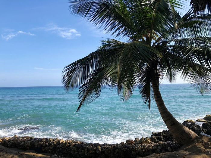 Lonely palm tree Sea Water Sky Beauty In Nature Tree Horizon Over Water Beach Scenics - Nature Tranquility Plant Horizon Land No People Idyllic Nature Tranquil Scene Outdoors Day Sunlight Tropical Climate