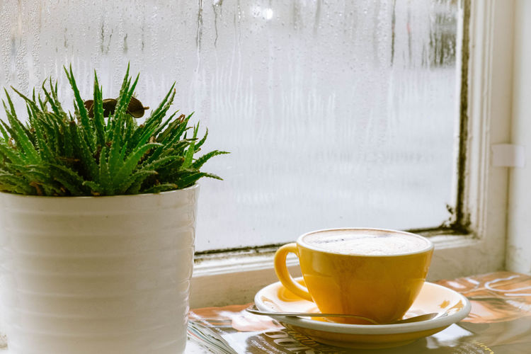 Drink Cup Food And Drink Refreshment Table Window Coffee Cup Mug Saucer Coffee Coffee - Drink Potted Plant Hot Drink Indoors  Close-up Still Life Freshness Frothy Drink Glass - Material