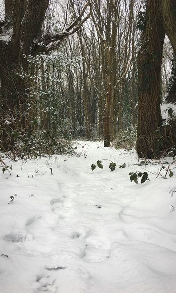 Snow Trail Snowy Woods Snowy Trees Snowy Forest Woods Forest Snow Winter Cold Temperature Nature Weather Tree Outdoors Beauty In Nature Day Tranquility Frozen