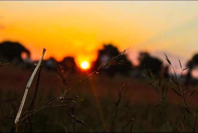 Sunset Nature Outdoors African Beauty Africa Live For The Story