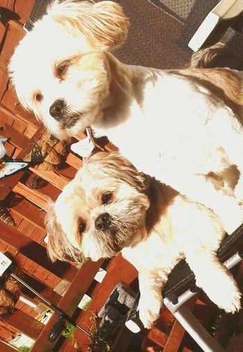 cassie and alfie.x First Eyeem Photo