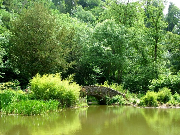 Bridge Over Lake 🏞 Tree Reflection Green Color Growth Nature Beauty In Nature Day Outdoors Water No People Outside Walking In The Woods Magical Forest Peace And Quiet Scenics Forest Pond Stone Bridge Murky Water Tranquility Reconnecting With Nature Explore Your World Tall Trees Breathing Space Done That. Been There. Lost In The Landscape