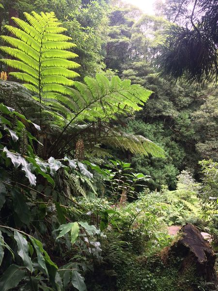 Outdoors Beauty In Nature No People Growth Green Color Leaf Day Forest