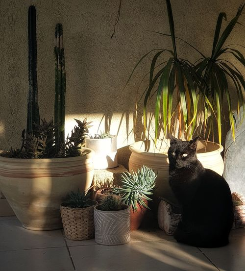 Cat on potted plant at home