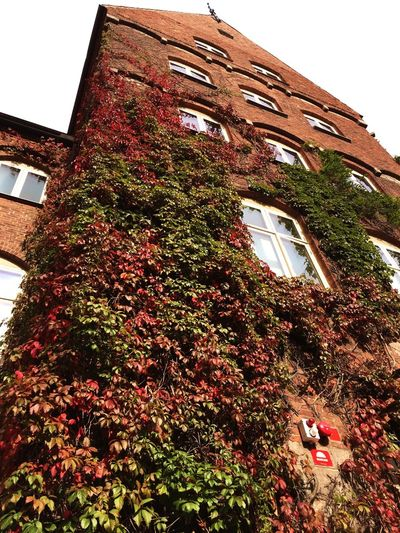Low Angle View Built Structure Building Exterior Architecture Ivy Growth Window Residential Building Plant Residential Structure House Creeper Wall - Building Feature Building Creeper Plant Sky In Front Of Day Growing In A Row