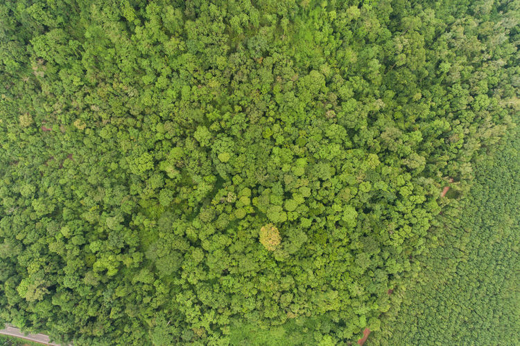 Aerial top view green forest for background Green Color Plant Growth No People Freshness High Angle View Nature Day Full Frame Food And Drink Beauty In Nature Foliage Lush Foliage Abundance Outdoors Leaf Plant Part Tranquility Healthy Eating Field Hedge