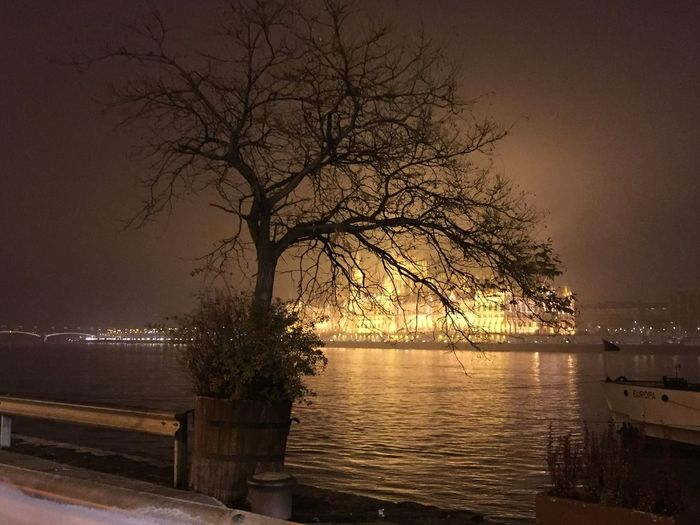 Hungary Budapest Parlament Parliament Tree Night PalaPhoto Beautiful Nofilter Winter Cities At Night
