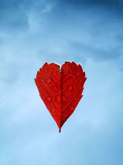 Close-up of red heart shape leaf against sky