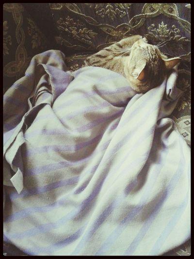 sleeping beauty Toby...ambuii...dgn selimut nye..seles sgt le tu