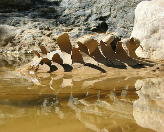 Mud curls. Arroyo Jevar River Collection River Detail Mud Dried Mud Reflection Nature Photography Nature_collection Andalucía Nature Water Wabi-sabi Andalucia Rural