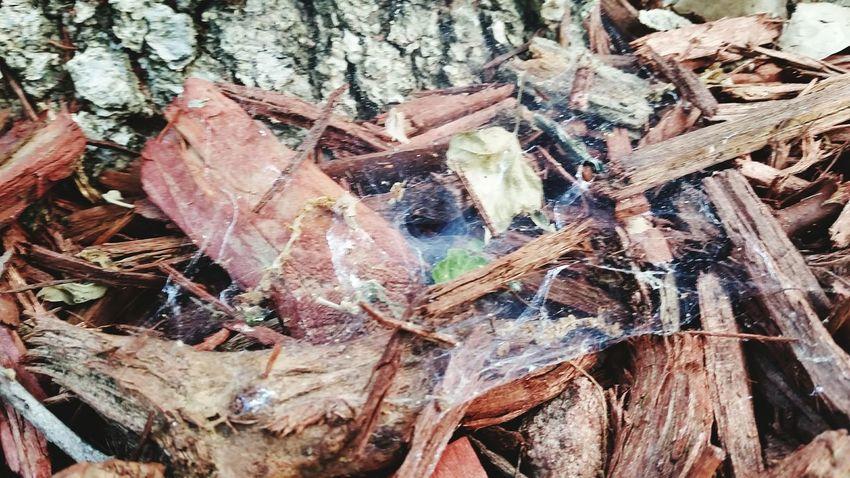 Spider Web Spider Tumnel Full Frame Backgrounds Close-up Web Arachnid Spider