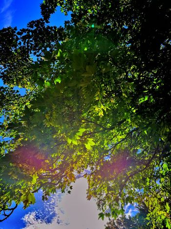 Tree Nature Outdoors Water Sky Day Low Angle View Green Color Forest No People Leaf Scenics Beauty In Nature Multi Colored Branch Freshness Sycamore Tree