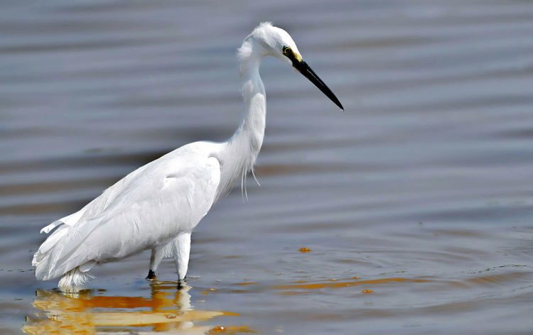 Great Hunter Animal Wildlife Animals In The Wild Beak Bird Close-up Lake One Animal White Color