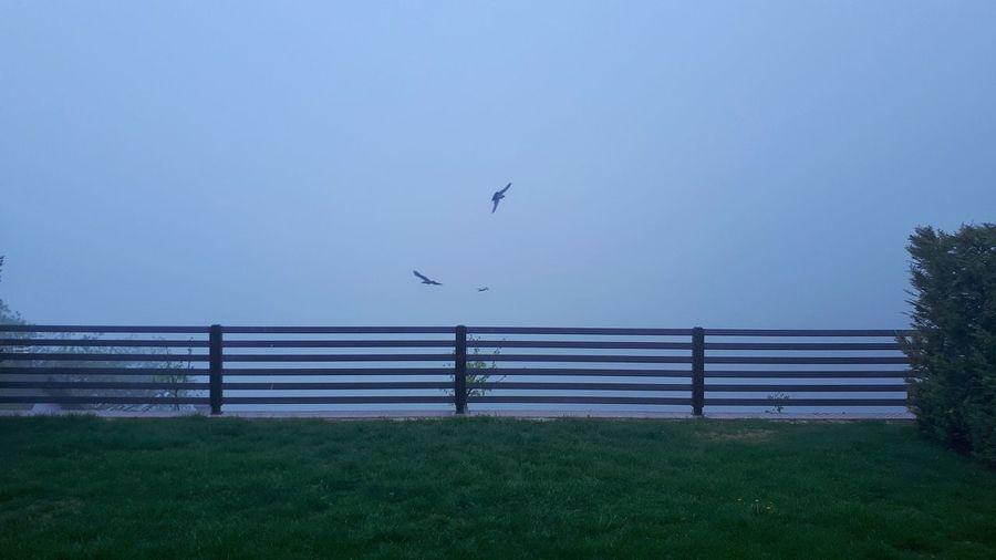 Bird Bird Of Prey Flying Oil Pump Tree Rural Scene Sky Animal Themes Grass