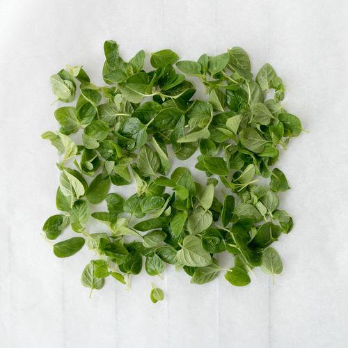 Oregano, ready to dry in the oven Close-up Fresh Oregano Freshness Green Color Marjolein Oregano Oregano Leaves Origanum Vulgare Wilde Marjolein