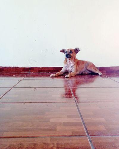 One Animal Pets Domestic Animals Dog Dog Love Animal Themes Home Day