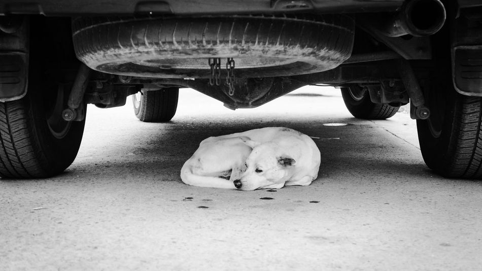 My place of comfort. San Pedro, Laguna Philippines Dogs Street Photography Photos That Will Restore Your Faith In Humanity EyeEm Best Shots Eyeem Photography EyeEm Best Shots - Black + White Eyeem Philippines The Week On EyeEm I Love My City Light And Shadow