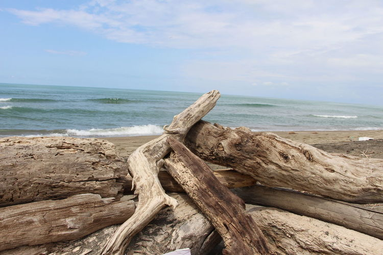 Beauty In Nature Tranquility No People Land Beach Water Sea Nature Trunk Tree Trunk Trunk Detail Trunk On The Beach Trunk In The Water Day Outdoors