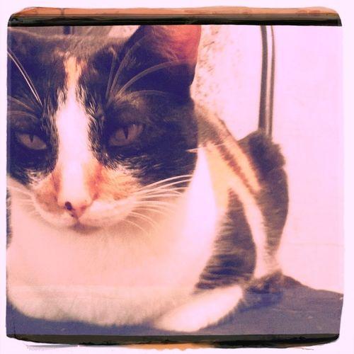 Cats Home Relaxing Hipstamatic Oggl Lucasab2 Kodama