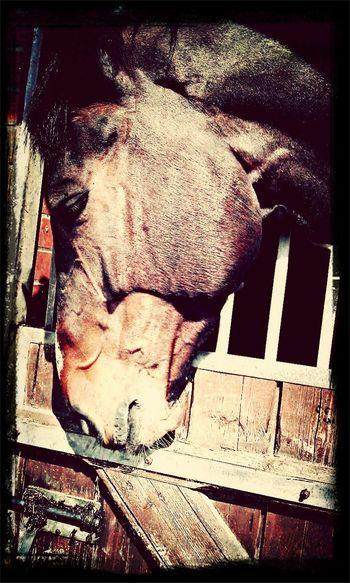 L'équitation Plus Qu'une Passion mon zoer's ❤️ Horse