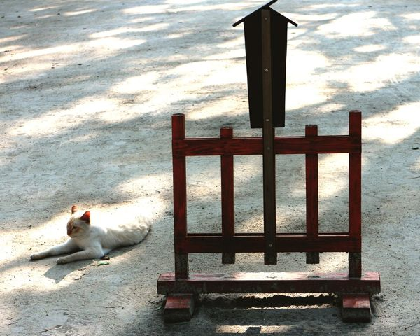 Cat Nature One Animal Red Color Treditional No People Sunlight Lovely Day 신사 지키미 고양이.