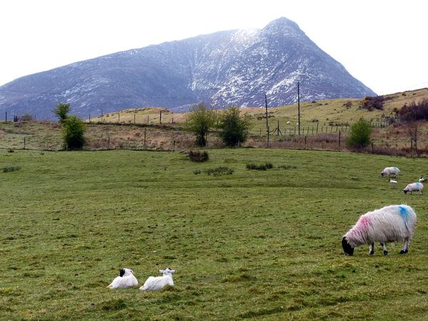 Babylamb Beauty In Nature Field Grass Grazing Landscape Mountain No People Outdoor Photography Outdoors Rural Scene Sheep Tranquil Scene Remote Day Hill Green Nature