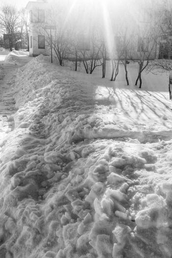 Sunny day. чернобелоефото Winter Blackandwhite Snow снег