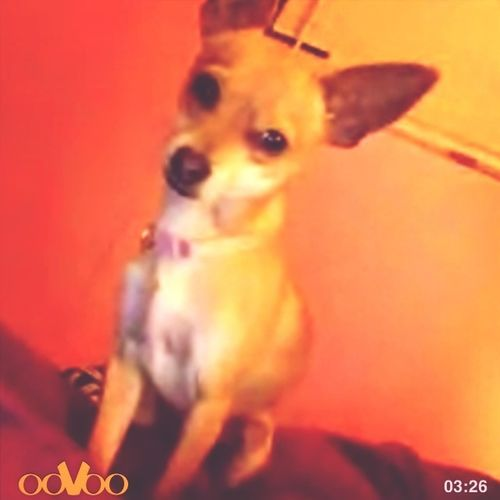 On Ovoo With My Baby<3