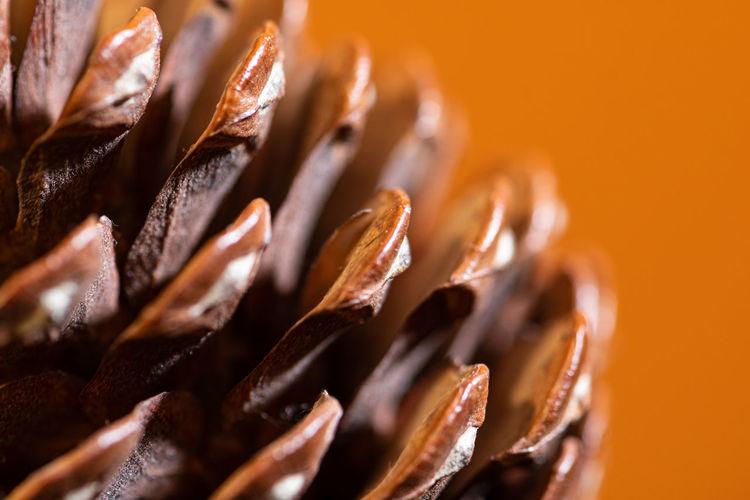 Close-up of ice cream