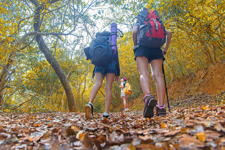 Rear view of people walking on leaves in forest